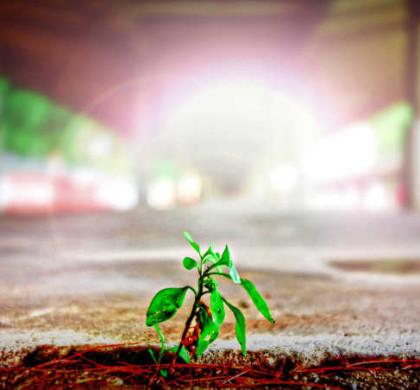 Necesidades de un negocio en crecimiento